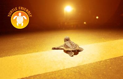 Turtle Friendly